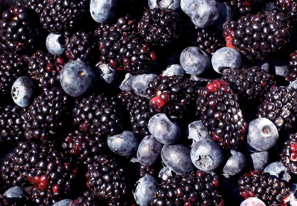 SNHS-7-dark-berries